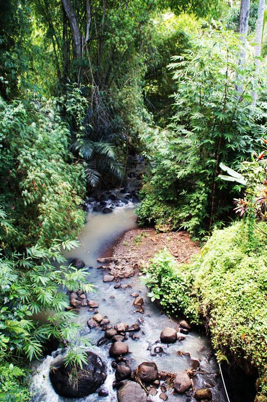 Bali_Heiße Quellen WaldK