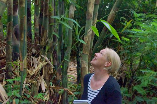 Munduk Moning Plantation _Bambus Suse